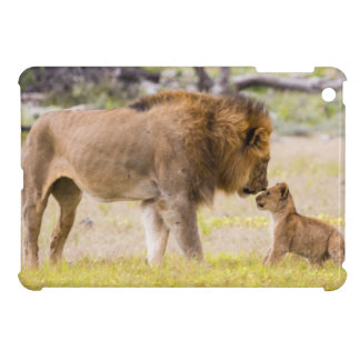 Alpha male lion inspects cub iPad mini cover