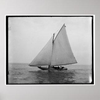 Alpha Sailing Yacht 1892 Poster
