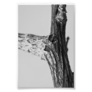 Alphabet Letter Photography Y8 Black and White 4x6 Photo Print
