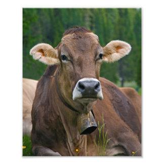 Alpine Cow Print Photographic Print