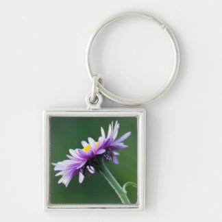 Alpine Daisy Silver-Colored Square Key Ring