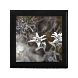 Alpine Edelweiss Small Square Gift Box