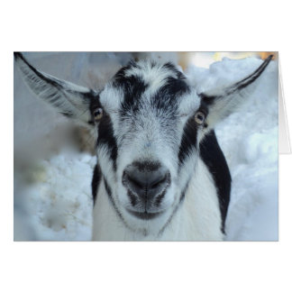 Alpine goat card