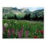 Alpine meadow in the Pasayten Wilderness, Californ Post Card