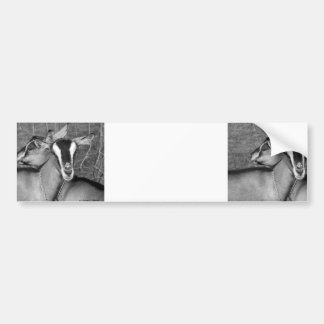 Alpine/Oberhasli goat does sisters photograph bw Bumper Sticker