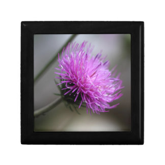 alpine thistle (Carduus defloratus) Gift Box