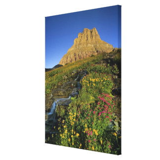 Alpine wildflowers & Mt Clements at Logan Pass Canvas Print