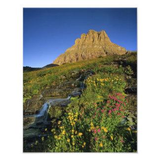 Alpine wildflowers & Mt Clements at Logan Pass Photo Print