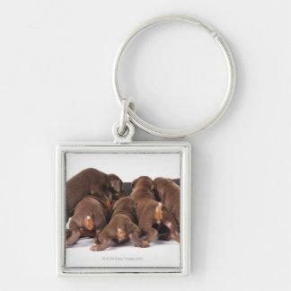 Also Doberman Pincher. Medium-sized domestic dog Silver-Colored Square Key Ring