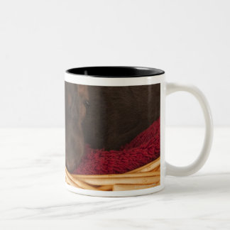 Also Doberman Pincher. Medium-sized domestic dog Two-Tone Coffee Mug