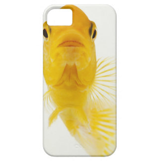 Also known as Comet-tailed goldfish. Hardy Case For The iPhone 5