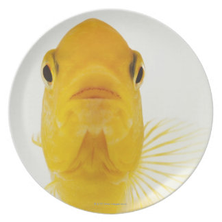 Also known as Comet-tailed goldfish. Hardy Plate