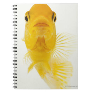 Also known as Comet-tailed goldfish. Hardy Spiral Notebook