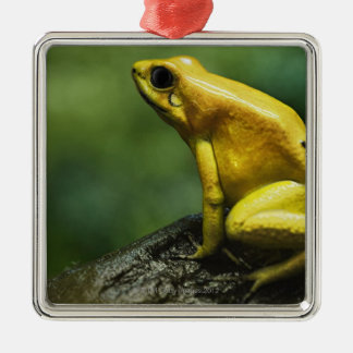 also known as Golden Dart Frog; endemic to the Silver-Colored Square Decoration