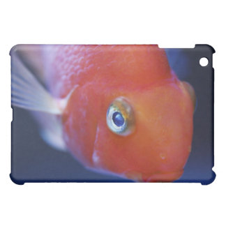 Also known as the Blood Parrot or Bloody Parrot. Case For The iPad Mini