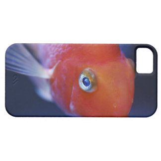 Also known as the Blood Parrot or Bloody Parrot. iPhone 5 Cover