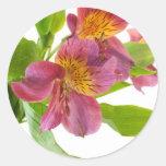 alstroemeria flowers stickers