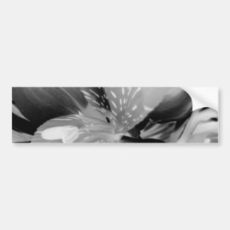 Alstroemeria Peruvian Lily Flower in Black White Bumper Sticker