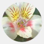 Alstroemeria White Flower Stickers