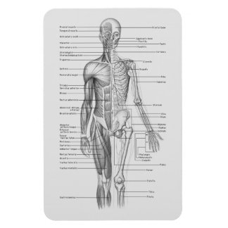 Always Learning: Human Body Anatomy Chart Rectangular Photo Magnet