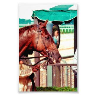 Alydar Thoroughbred Racehorse 1979 Photograph