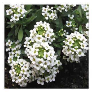 Alyssum White Green Custom Invite