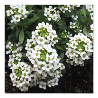 Alyssum White Green Invitations