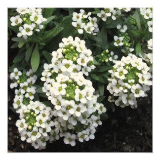 Alyssum White Green Personalized Invite