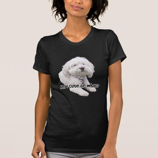 Am I Cute or What? Bichon Frise Dog