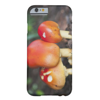 Amanita family mushroom barely there iPhone 6 case