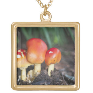 Amanita family mushroom gold plated necklace