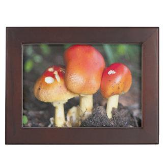Amanita family mushroom keepsake box
