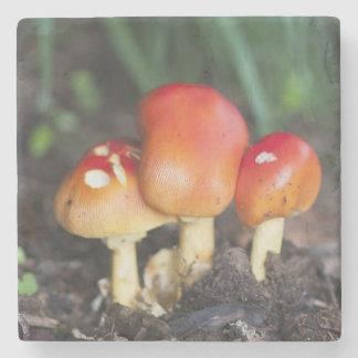 Amanita family mushroom stone coaster