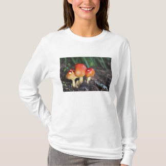 Amanita family mushroom T-Shirt