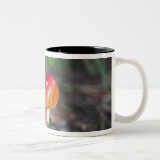 Amanita family mushroom Two-Tone coffee mug