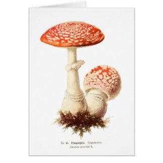 Amanita muscaria card