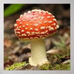 Amanita Mushroom Poster