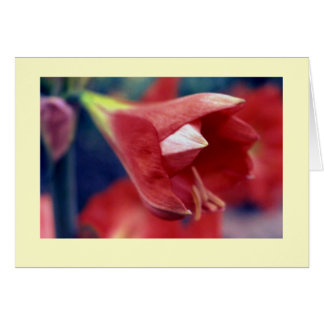 """Amaryllis #1"" Card"