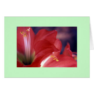 """Amaryllis #2"" Card"