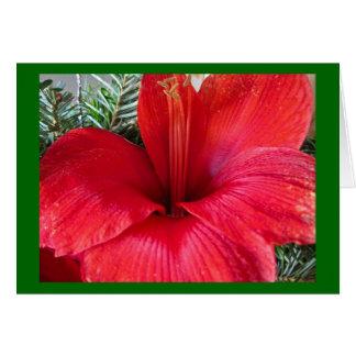 Amaryllis Blossom Card