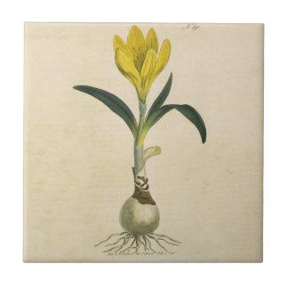 Amaryllis Botanical Vintage Garden Print Tile