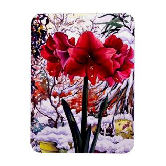 Amaryllis by Snow Window Rectangular Photo Magnet