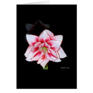 Amaryllis card