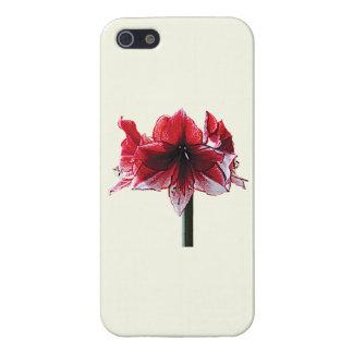 Amaryllis Charisma iPhone 5 Cases