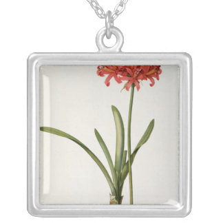 Amaryllis Curvifolia, 1809, from `Les Silver Plated Necklace