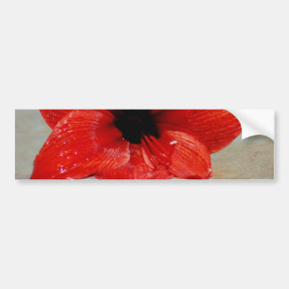 Amaryllis flower and its meaning bumper sticker