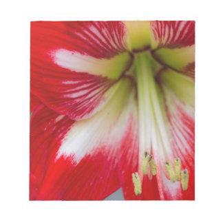 amaryllis flower in the garden notepad