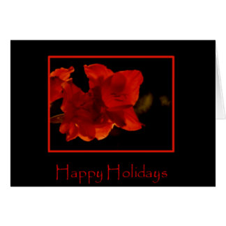 Amaryllis Holiday Card
