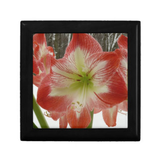 Amaryllis in Snow I Red Holiday Winter Floral Gift Box