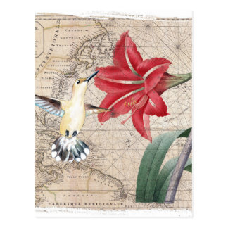 Amaryllis Mao Hummer Postcard